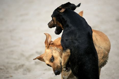Why do dogs fight