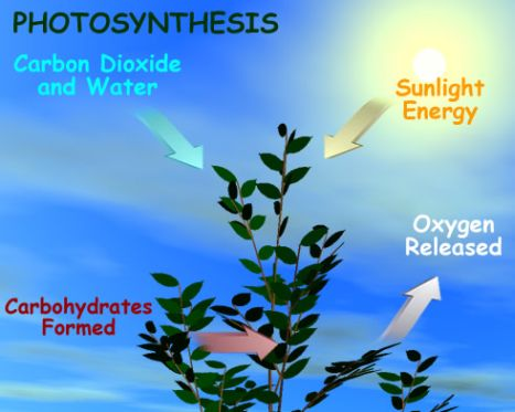Why do plants need photosynthesis