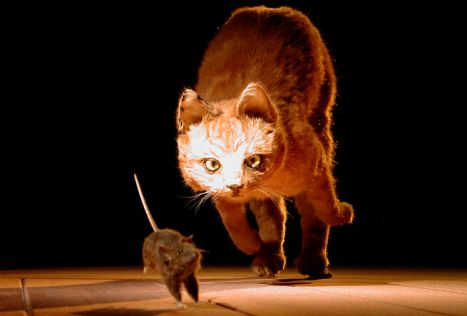 Why do cats chase mice