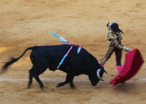 Why do bulls get angry at red