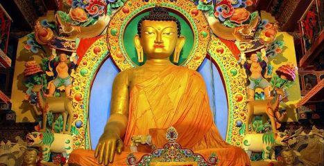 Why Do We Study Buddhism