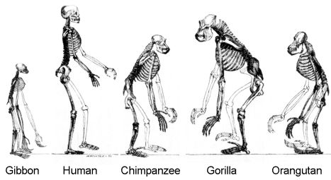 Why Do We Study the Evolution of Animals