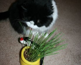 Why Do Cats Nibble Grass