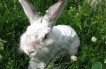 Why Do Your Rabbits Lose Fur